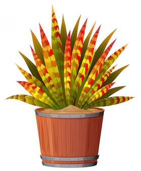 Une plante dans le pot