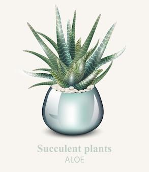 Plante détaillée d'aloe vera