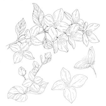 Plante en fleur, branche avec dessin à l'encre de fleur