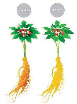 Plante de ginseng