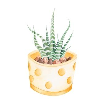 Plante de haworthia attenuata zèbre dessiné à la main