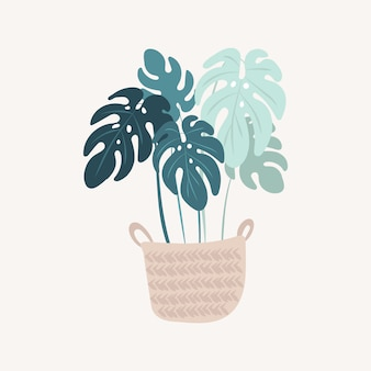 Plante monstera en pot.