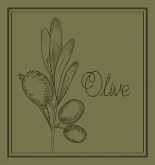 Plante d'olive dessiné cuisine italienne
