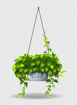 Plante en pot accrochée au mur