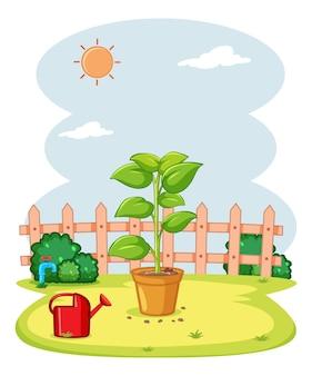 Plante en pot dans le jardin