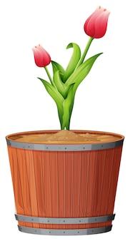 Plante en pot avec des feuilles vertes sur un fond blanc isolé