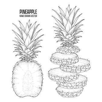 Plante Tropicale Ananas Dessinés à La Main Croquis Vecteur Illustrations Botaniques Vecteur gratuit