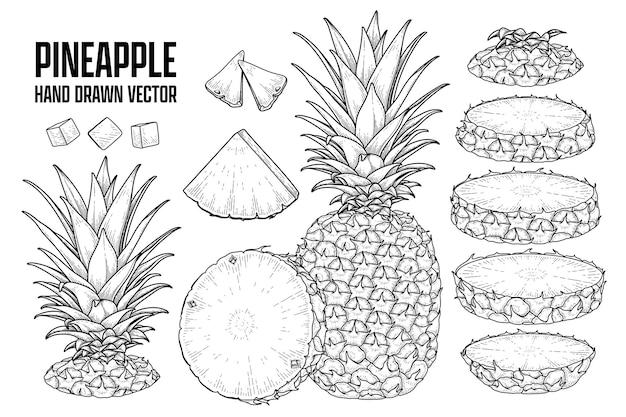 Plante tropicale ananas dessinés à la main croquis vecteur illustrations botaniques