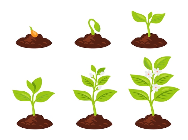 Planter un arbre. les graines germent dans le sol. la plante pousse