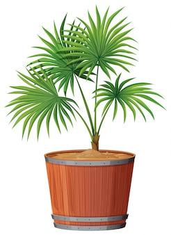 Planter en baril