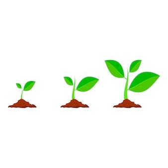 Planter des icônes d'arbre