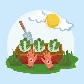 Planter des salades et des outils
