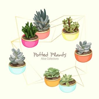 Plantes alice en pot