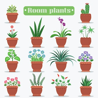 Plantes d'ambiance dans le set de vases en argile