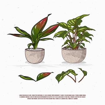 Plantes dans la conception d'illustration de pot