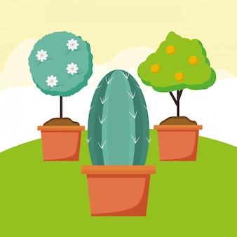 Plantes dans le jardin
