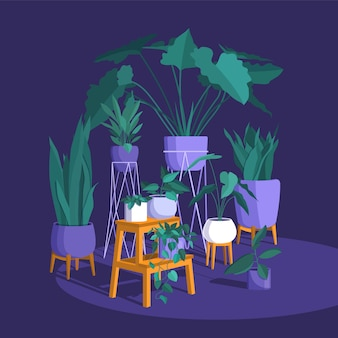 Plantes décoratives et belles à la maison.