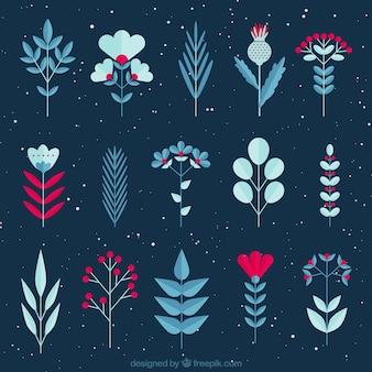 Plantes décoratives d'hiver