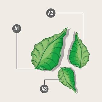 Plantes avec différentes expériences botaniques à base de plantes