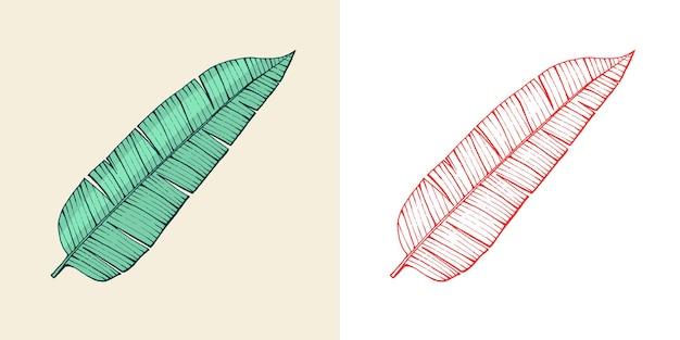 Plantes à fleurs feuilles tropicales ou exotiques et feuilles de palmier à feuilles de fougère vintage de monstera gravées