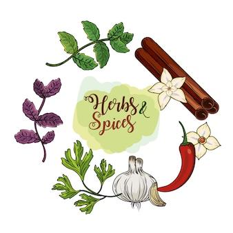 Plantes d'herbes et d'épices et nourriture pour organes