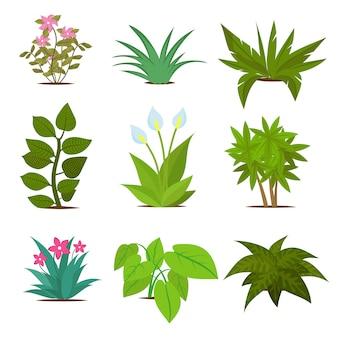 Plantes d'intérieur colorées isolées