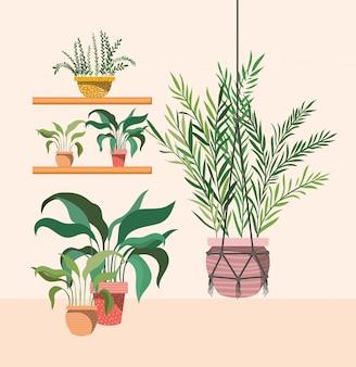 Plantes d'intérieur dans le cintre et les étagères en macramé