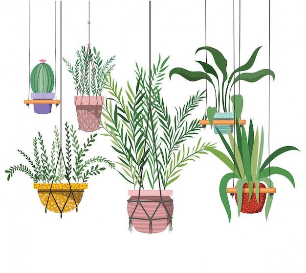 Plantes d'intérieur sur l'icône de cintres en macramé