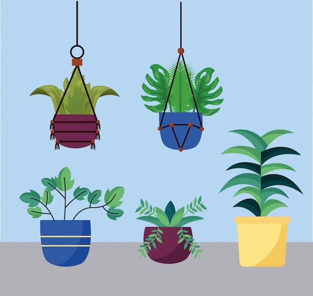 Plantes d'intérieur isolées à l'intérieur du vecteur de pots