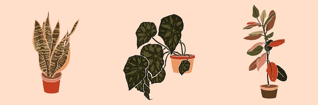 Plantes d'intérieur en pot de collage d'art dans un style tendance minimal. silhouette de plantes sansevieria, bégonia et ficus dans un style abstrait simple et contemporain sur fond rose. illustration vectorielle à main levée