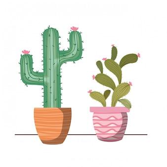 Plantes d'intérieur avec pot