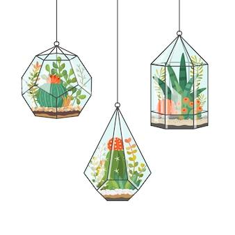 Plantes d'intérieur tropicales et cactus dans des terrariums suspendus