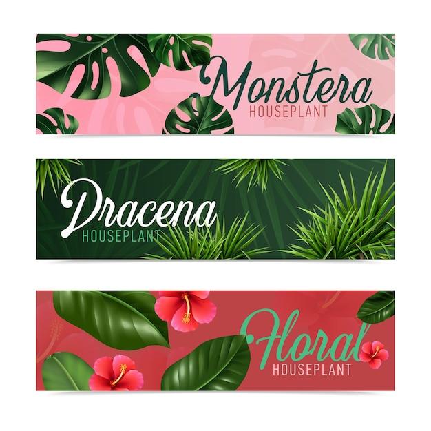 Plantes d'intérieur tropicales exotiques 3 bannières horizontales colorées réalistes