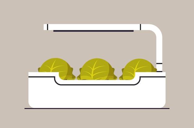 Plantes de laitue de chou en pot en pot avec lampe plantant un concept de jardin botanique à effet de serre horizontal