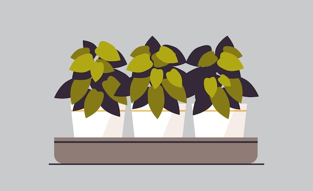 Plantes en pot herbes dans des pots la plantation de serres concept de jardin botanique illustration vectorielle