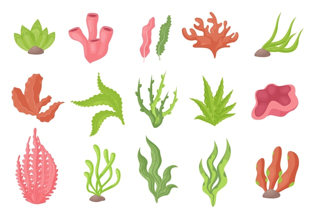 Plantes sous-marines d'algues marines du fond de la mer ou d'aquarium, algues marines ou coraux d'algues marines