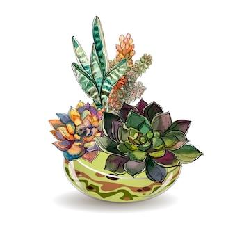 Plantes succulentes dans des aquariums en verre. aquarelle.