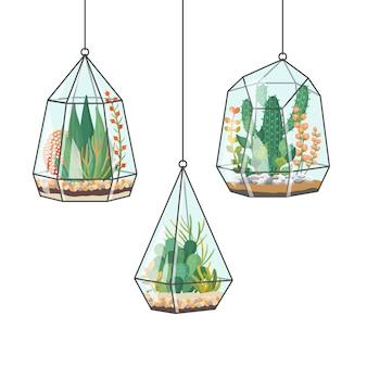 Plantes tropicales et cactus dans des terrariums suspendus