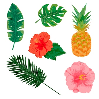 Plantes tropicales et éléments