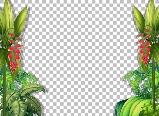 Plantes tropicales et feuilles sur fond transparent