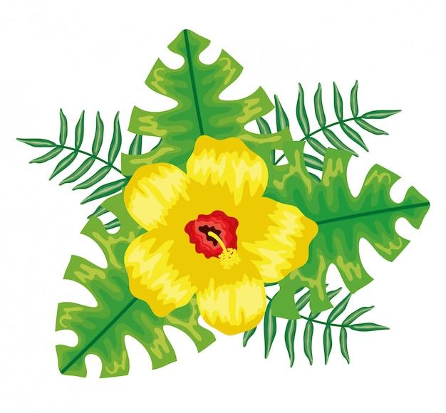 Plantes tropicales à fleurs et à feuilles