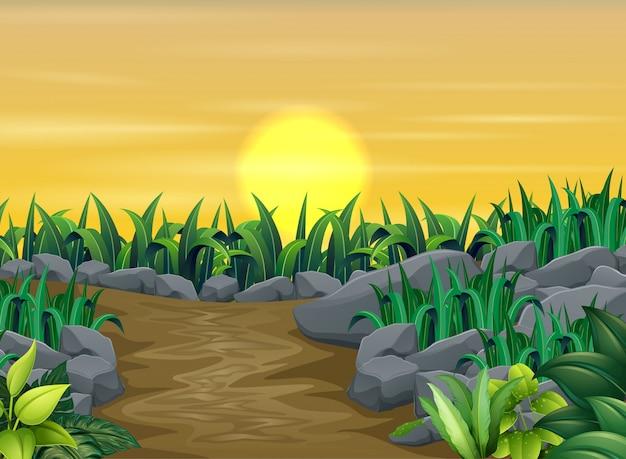 Plantes vertes avec paysage coucher de soleil