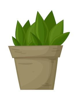 Plantez dans la plante ornementale de pot de maison d'isolement sur le fond blanc grande plante pour votre conception