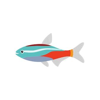 Plat d'aquarium de poissons néon.