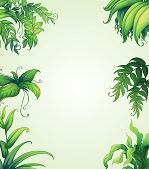 Plusieurs feuilles