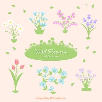 Plusieurs fleurs sauvages avec des feuilles