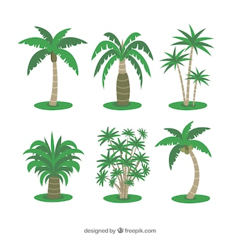 Plusieurs palmiers tropicaux