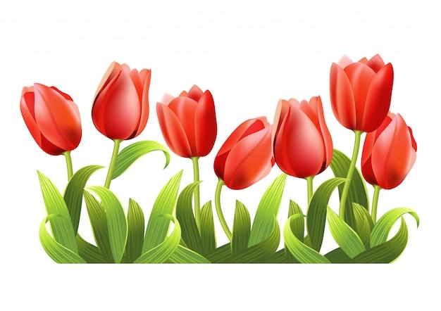 Plusieurs tulipes rouges en croissance réalistes.