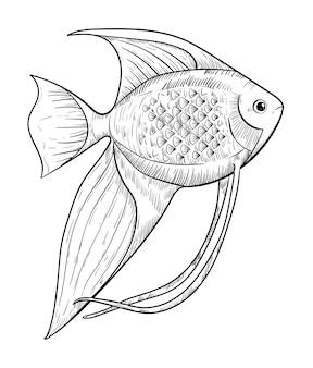 Poisson-ange d'aquarium dessiné à la main isolé sur fond blanc