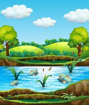 Poisson dans l'étang nature